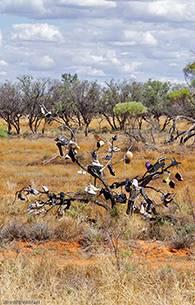 Nullabor Plains Australia image